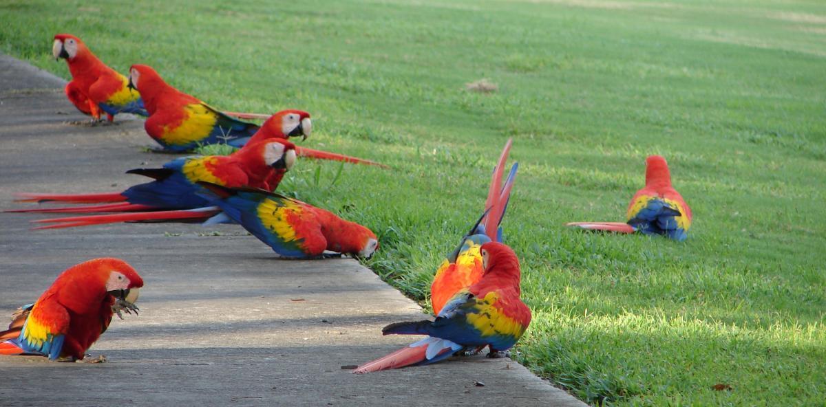 parrots3