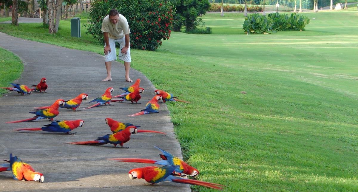 parrots4